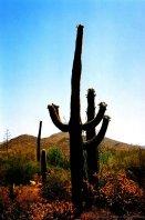 2006-arizona-c-02-35-030